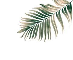 folha verde seca foto