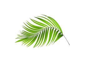 folha curva isolada