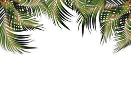 moldura de folha tropical foto