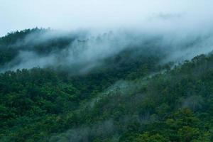 névoa sobre a floresta foto