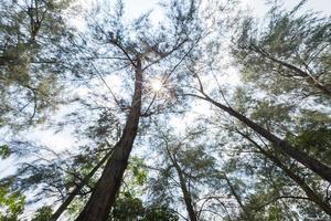árvores na floresta foto