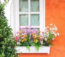 flores na caixa de janela