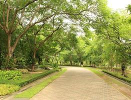 caminho no parque foto