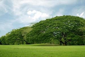 gramado e árvores verdes