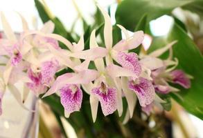 flores de orquídea lá fora