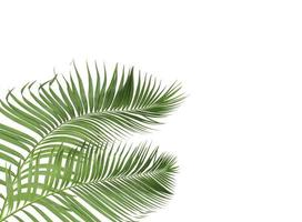 folhas verdes tropicais foto