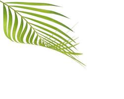 folha verde e espaço de cópia foto