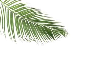 folhas verdes de palmeira de verão foto