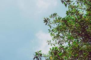 folhas de uma árvore