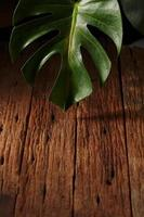 folha monstera na madeira