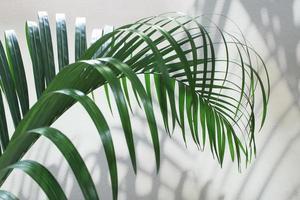 folha de palmeira e sombra no concreto foto