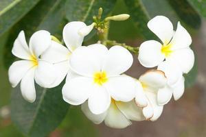 flores brancas em uma árvore foto
