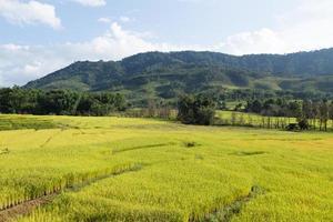 fazenda de arroz na montanha da tailândia foto