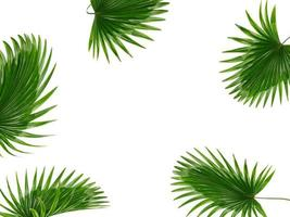 moldura de folha verde foto