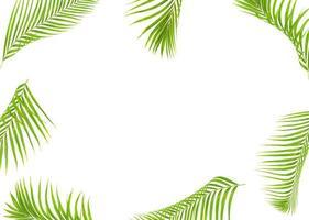 moldura em folha de palmeira foto