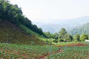 área agrícola nas montanhas foto