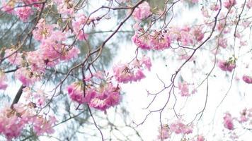 fundo de flor de primavera foto