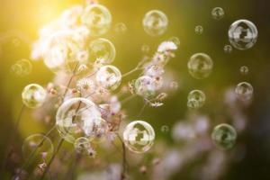 bolhas no jardim foto