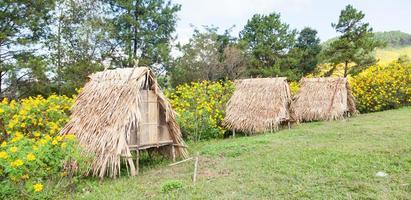 cabana no gramado foto
