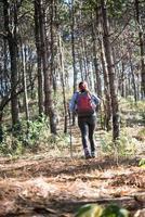 traseira de mulheres caminhando com mochila por uma floresta de pinheiros