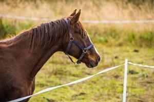 vista lateral de um cavalo marrom foto