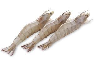 três camarões frescos foto