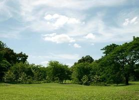 céu azul acima do gramado verde