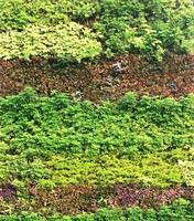 parede vertical do jardim