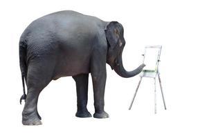 elefante colorido show foto