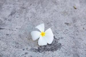 flor branca no chão