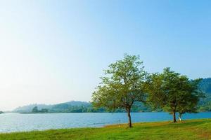 árvores perto do lago foto