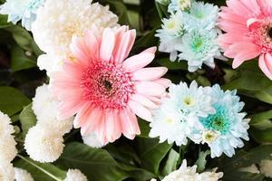 flores rosa e azuis desabrochando foto
