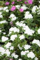pequeno jardim de flores