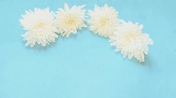 flores brancas em fundo azul bebê