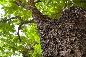 debaixo da árvore foto