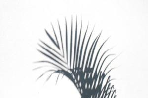 sombra de folha de palmeira foto