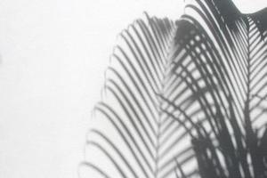 sombras de folhas de palmeira foto