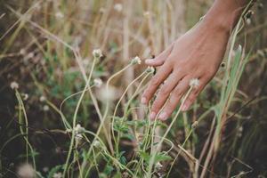 close-up da mão de uma mulher tocando a grama foto