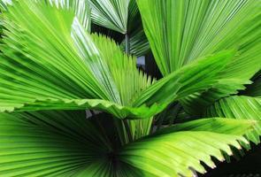 planta tropical vibrante