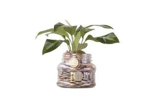 garrafa de moedas com planta crescendo foto