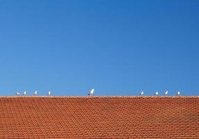 pássaros no telhado de telhas foto