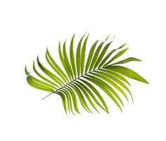 folha tropical em uma superfície branca foto