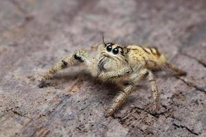 foto close-up de aranha