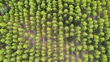 vista aérea de uma floresta de árvores verdes