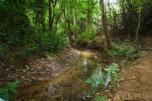 riacho na floresta foto