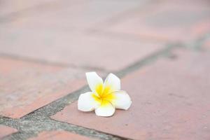 pequena flor branca no chão