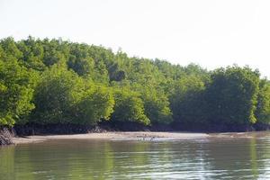 floresta de mangue na tailândia foto