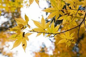 mudança de cor do outono no japão