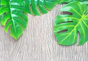 folhas verdes de monstera na madeira foto
