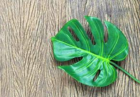 folha verde na madeira foto